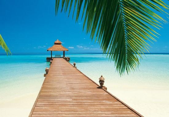 Большая ветка пальмы на пляже