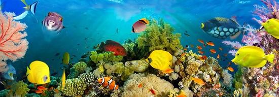 Подводный мир с желтыми рыбками