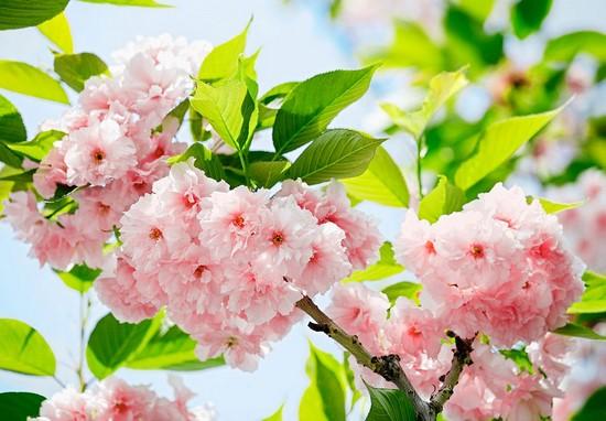 Фотообои Розовые цветы в солнечный день