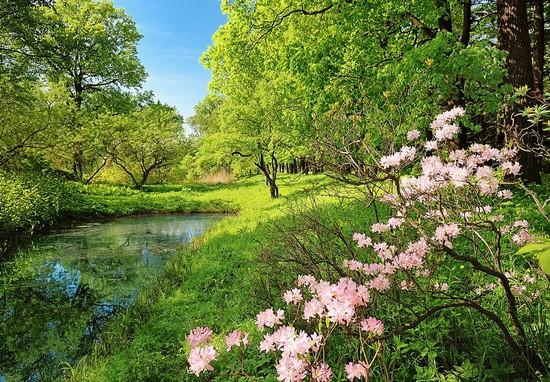 розовые цветы в парке