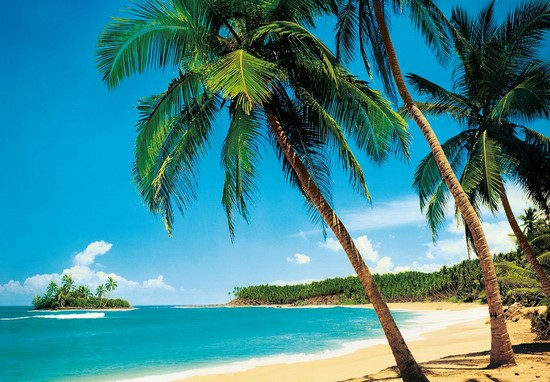 Пальмы и пляж на бирюзовом море