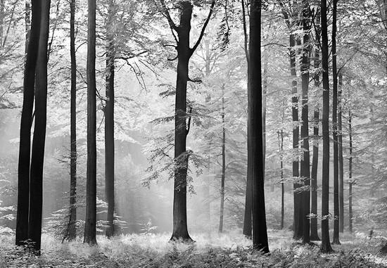 Черно-белые деревья в лесу