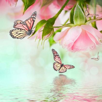 Фотообои Роза с бабочками и вода