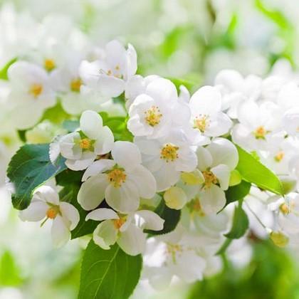 Белый цветок на ветке дерева