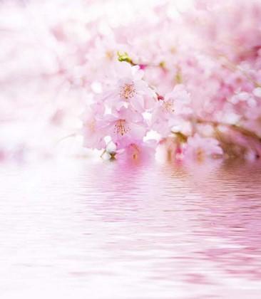 Нежно розовые цветы на розовой воде