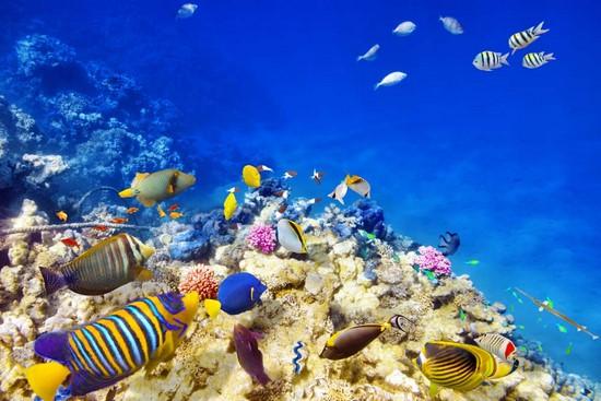 Подводный мир с разноцветными рыбками
