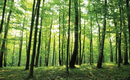 Лес с дневным светом и яркозелеными листьями