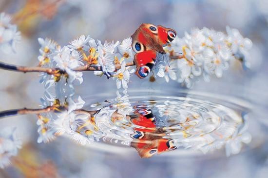 Бабочка красная на белой веточке