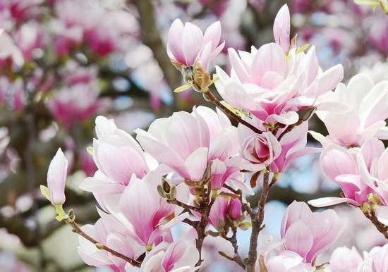 Розовый цветочек с нежными лепестками