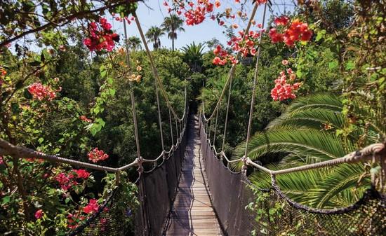 Висячий мост над джунглями