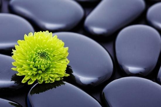 Фотообои Камни и зелено-желтый цветок