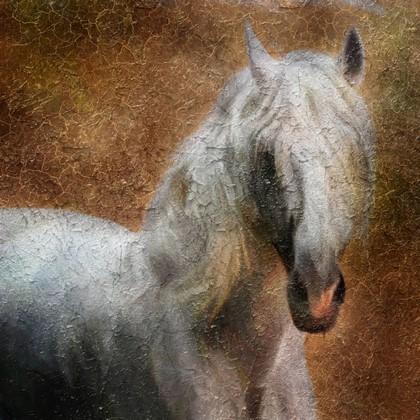 Лошадь на коричневом фоне