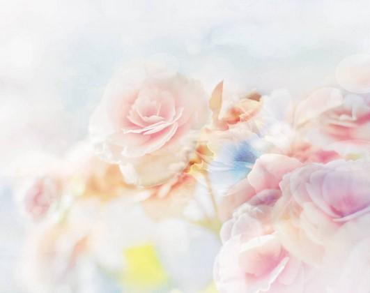 Фотообои Воздушные розы