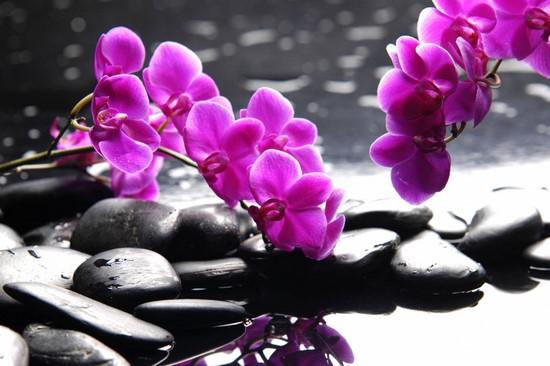 Орхидеи розовые на камнях
