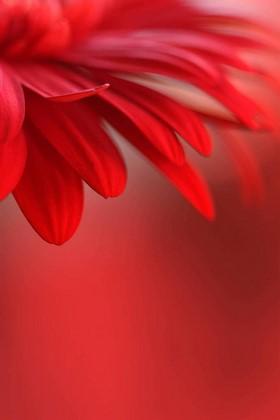 Фотообои Красный цветок на красном фоне