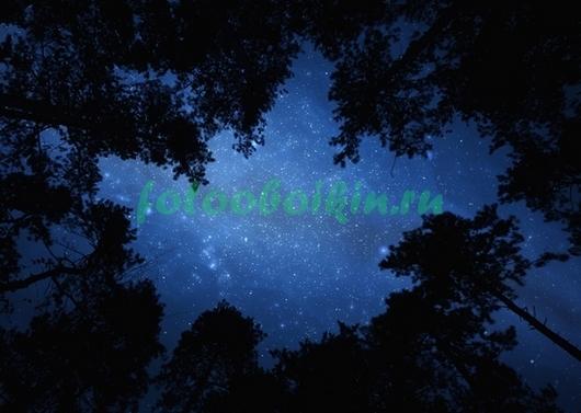 Звездное небо и макушки деревьев