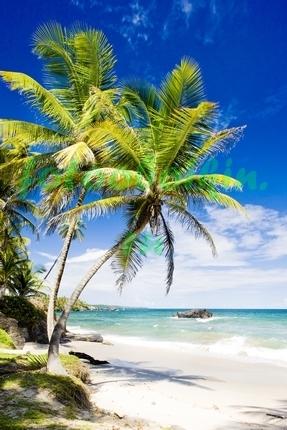 Пальмы на фоне неба