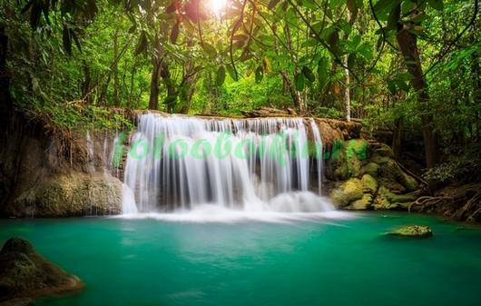 В тропическом лесу