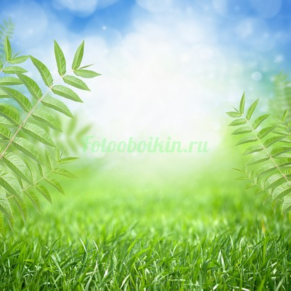 Трава с папоротником