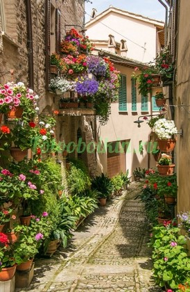 Красивая улица с цветами