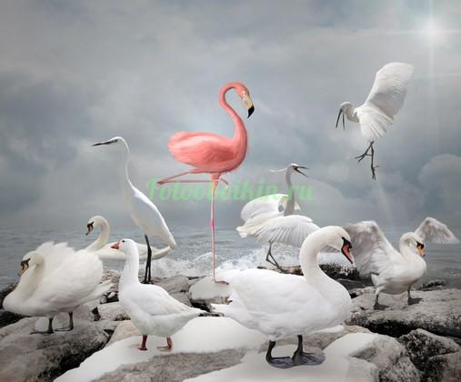 Розовый фламинго и лебеди