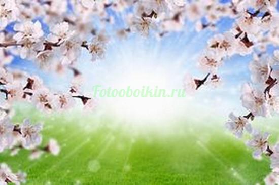Фотообои Ветки сакуры на зеленом лугу