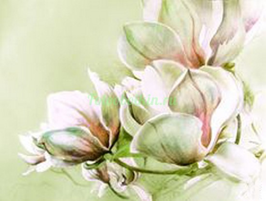 Три цветка магнолии
