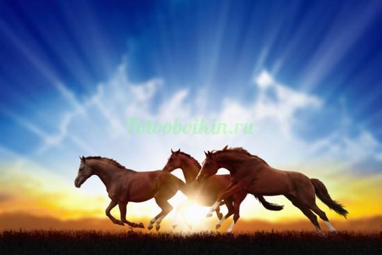 Три лошади на фоне солнца
