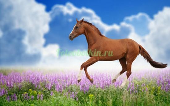 Лошадка в поле
