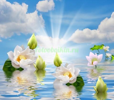 Фотообои Лилии на голубой воде