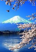 Сакура и Фудзияма