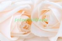 Розы для влюбленных