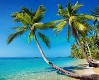 Пальмы у воды