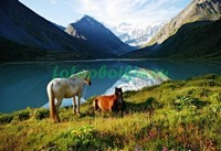 Две лошади у горного озера