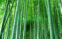 Бамбук цвета морской волны