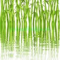 Бамбук из воды