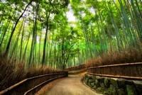 Тропинка в бамбуковом лесу