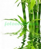 Стебли бамбука из воды