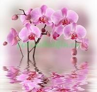 Орхидея с отражением