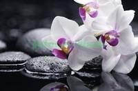Бело-розовая орхидея с галькой