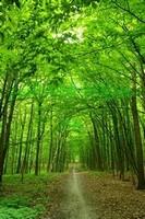 Зелёный лес