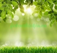 Трава и листья