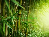 Летний бамбук