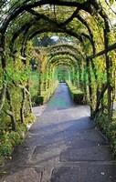 Красивая арка