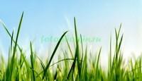 Трава 3Д