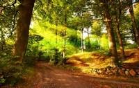Дорога в лесу 3Д