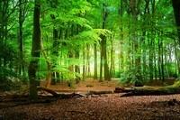 Яркий зеленый лес