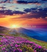 Цветы в альпийских горах