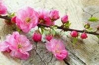 Красивые цветы на ветке