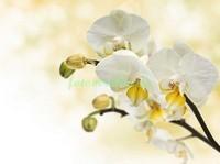 Веточка орхидеи